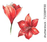 amaryllis. christmas red lily... | Shutterstock . vector #713389930