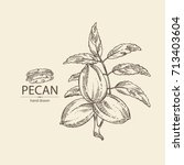 Background With Pecan  Branch...
