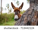 donkey baby is a cute curious... | Shutterstock . vector #713442124
