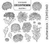 set of isolated chrysanthemum...   Shutterstock .eps vector #713451460