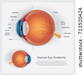 human eye anatomy vector... | Shutterstock .eps vector #713520424