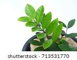 zamioculcas zamiifolia   green...   Shutterstock . vector #713531770