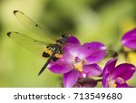 The  Dragonfly On The Orchid...