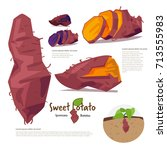 sweet potato. information... | Shutterstock .eps vector #713555983