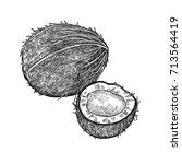 coconut. realistic vector... | Shutterstock .eps vector #713564419