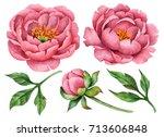 set of watercolor peonies and... | Shutterstock . vector #713606848
