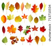 set of autumn colored leaves .... | Shutterstock .eps vector #713710534