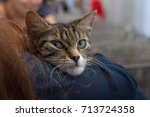 Stock photo kitten in the hands of a volunteer in a shelter for homeless animals pets 713724358
