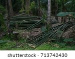 bamboo cut into forest | Shutterstock . vector #713742430