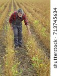 Small photo of Farmer or agronomist examining soybean plant in field ready for harvest after drought