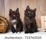 Stock photo two kurilian bobtail kittens funny and cute couple 713762020