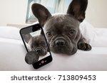 French Bulldog Dog Relaxing  O...