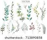 Stock vector vector big set watercolor elements wildflower herbs leaf collection garden wild foliage 713890858