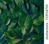 nature minimal concept   green... | Shutterstock . vector #713918704