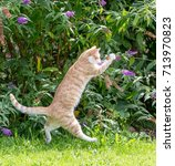 Stock photo red cat jumping trying to catch a butterfly 713970823