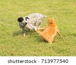Small photo of Ginger tabby cat chasing after a pushy spotted dog running by, defending his personal space
