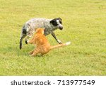 Stock photo ginger tabby cat swatting at an obnoxious spotted dog protecting his personal space 713977549
