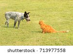 Small photo of Ginger tabby cat and a spotted dog in a standoff, with the pushy dog trying to encroach the cat, and cat standing his ground