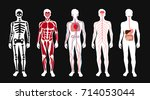 different systems of human body ... | Shutterstock .eps vector #714053044