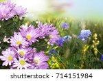 chrysanthemum.summer flora   Shutterstock . vector #714151984