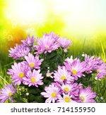 beautiful pink garden...   Shutterstock . vector #714155950