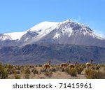 Volcano And Vicunas On Andes...