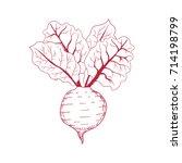 hand drawn beet on white... | Shutterstock .eps vector #714198799