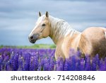 Stock photo portrait of a palomino horse 714208846