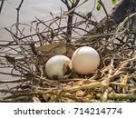 Bird Nest On The Tree With...