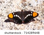 Small photo of Close up from above (dorsal view) of a California Sister Butterfly (Adelpha californica) with open wings on a rock near the Vernal Falls in Yosemite National Park.
