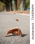 Small photo of closeup of autumnal Aesculus hippocastanum leaf on the road in border channel in Mulhouse