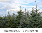 conifers in a christmas tree... | Shutterstock . vector #714322678