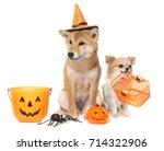 young shiba inu and chihuahua... | Shutterstock . vector #714322906
