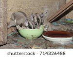 Little Animal Eating