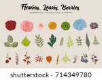 flowers  leaves  berries set.... | Shutterstock .eps vector #714349780
