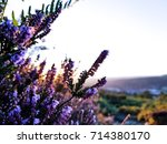 photo of a couple purple  pink  ...   Shutterstock . vector #714380170