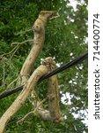cosheston  pembrokeshire  uk  ... | Shutterstock . vector #714400774