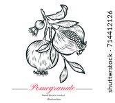 pomegranate fruit  berry.vector ... | Shutterstock .eps vector #714412126
