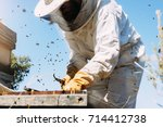 Beekeeper Working Collect Hone...