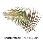 concept summer with green palm... | Shutterstock . vector #714418804