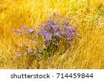 flowers in steppe. background... | Shutterstock . vector #714459844
