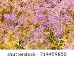 flowers in steppe. background... | Shutterstock . vector #714459850