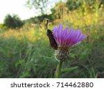 six spot burnet butterfly ...   Shutterstock . vector #714462880