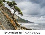 Stony Coast And A Lonely Tree...