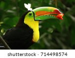 toucan  colombia | Shutterstock . vector #714498574