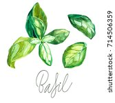 basil set. botanical drawing of ...   Shutterstock . vector #714506359