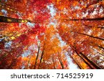 bottom view of the tops of... | Shutterstock . vector #714525919