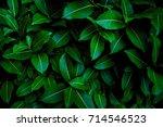 Fresh Green Leaves Pattern...