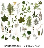 Herbarium   Collection Of Drie...
