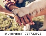 Stock photo hands and paws of all family members father mother daughter and dog are taking hands together 714723928